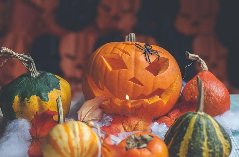 Jack-o-lantern Halloween decoration with pumpkins and plastic spider