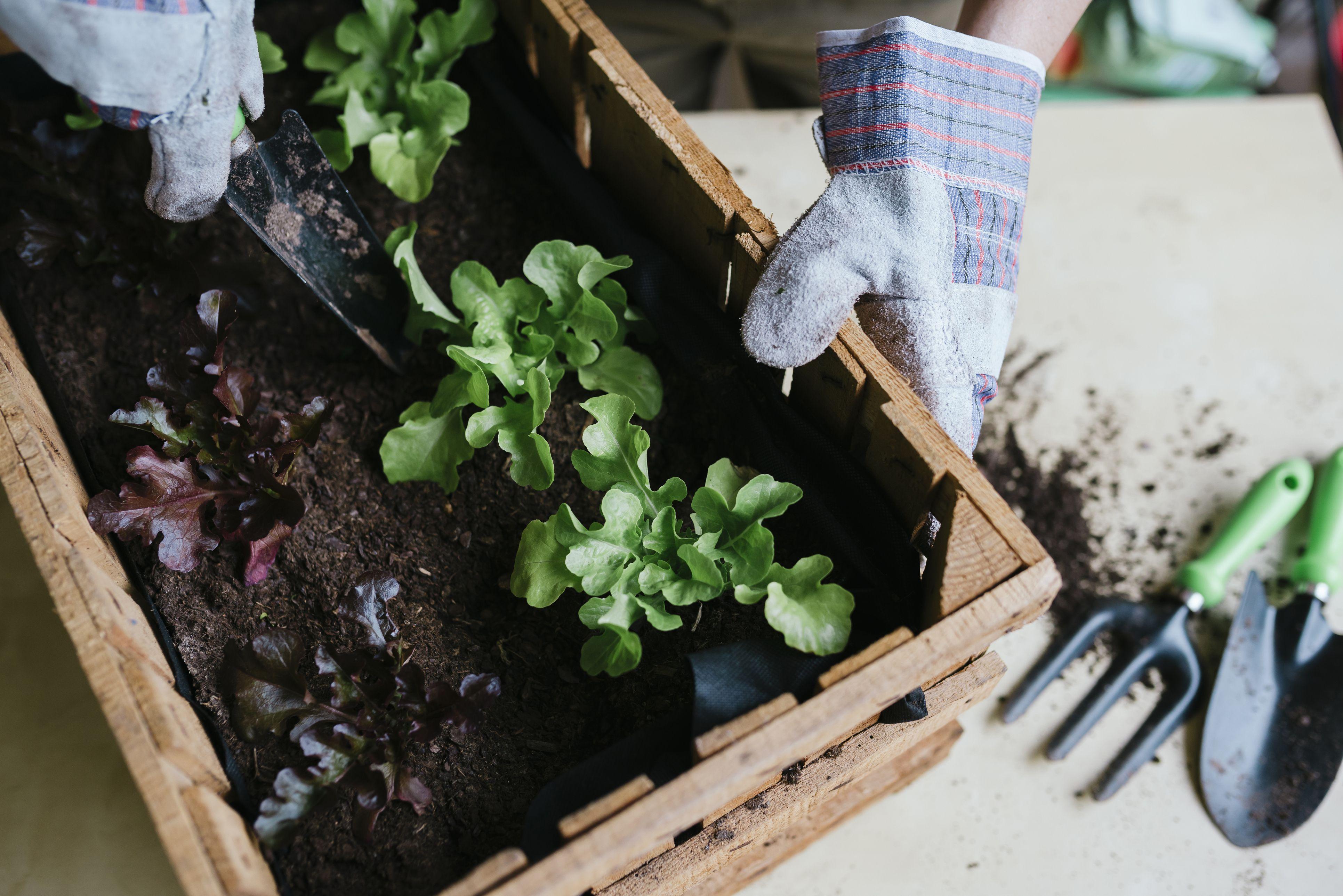 Indoor Veggie Garden How to grow vegetables indoors workwithnaturefo