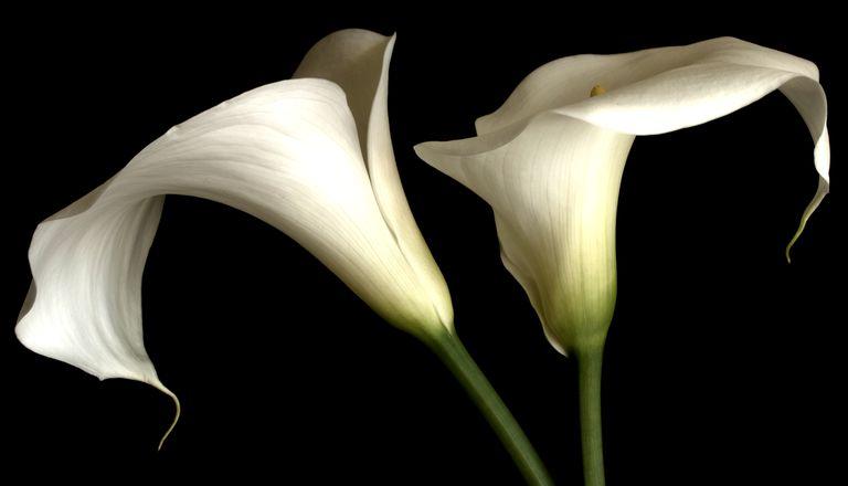 2 lilies