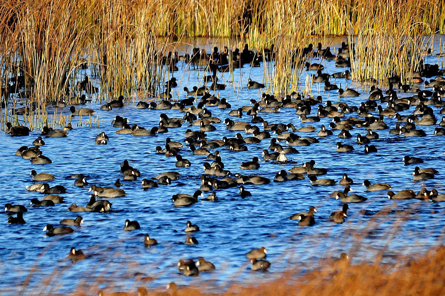 What does a flock of birds mean what does gregarious mean if youre a bird get the definition buycottarizona