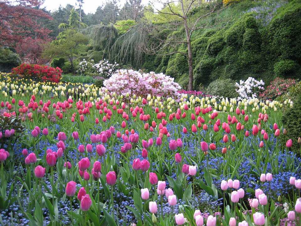 A massive flower garden