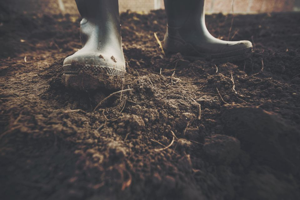 Muddy gardening boots