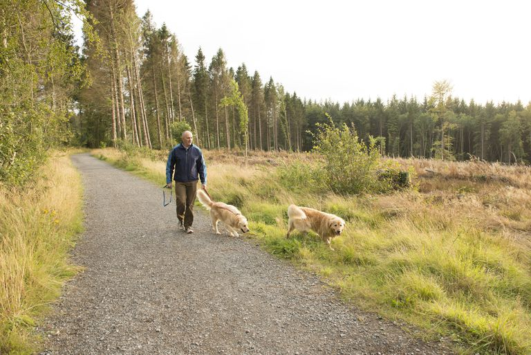 walk in the woods with dogs