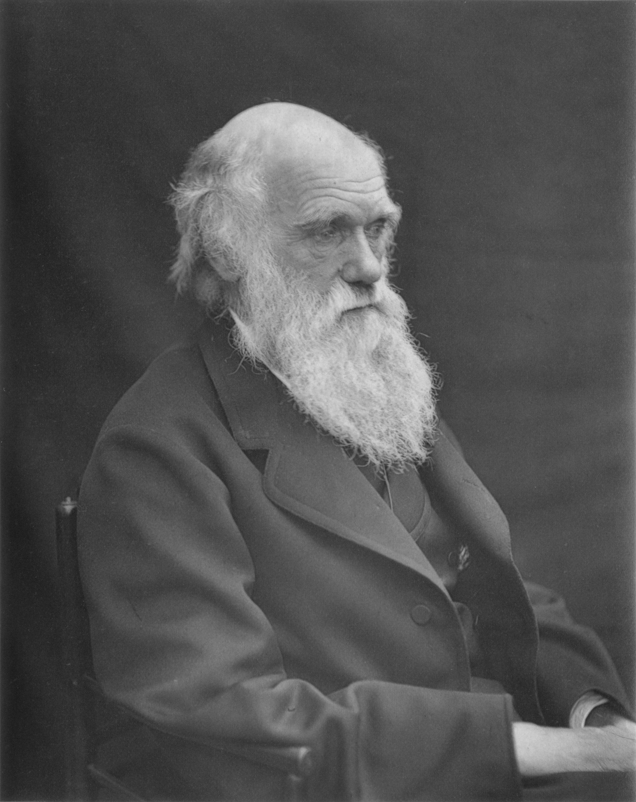 charles darwin s finches and the theory of evolution charles darwin circa 1874