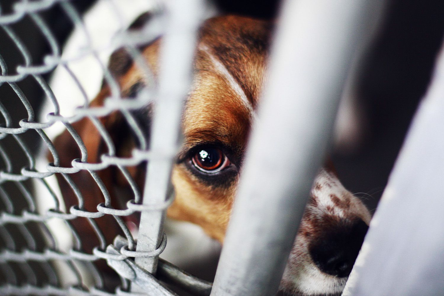 the major issue of cruelty to animals
