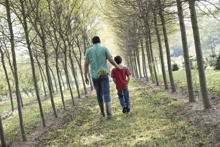 A man and a young boy walking down an avenue of trees.