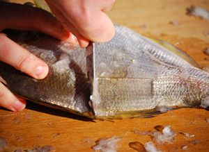 Easily scale and gut your fish with a butter knife for Best fish scaler