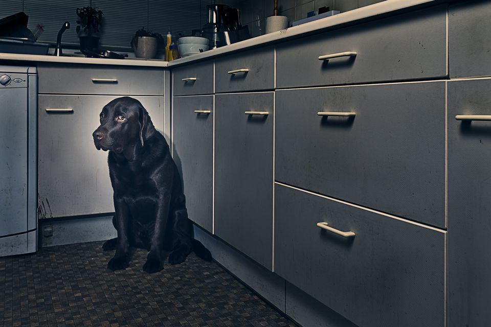 Frightened Dog in Corner of Kitchen