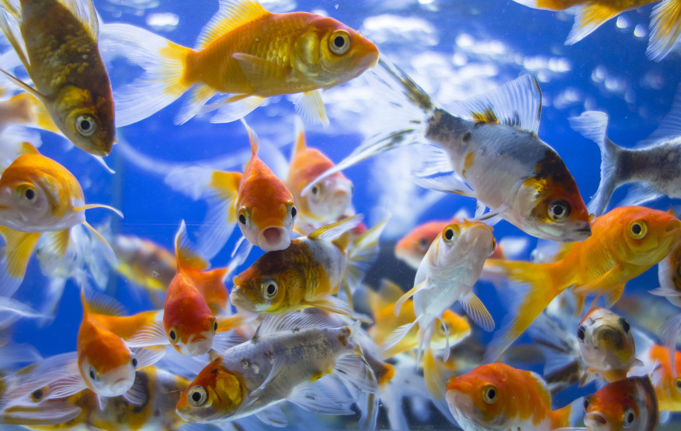 Save Time And Money With Automatic Fish Feeders