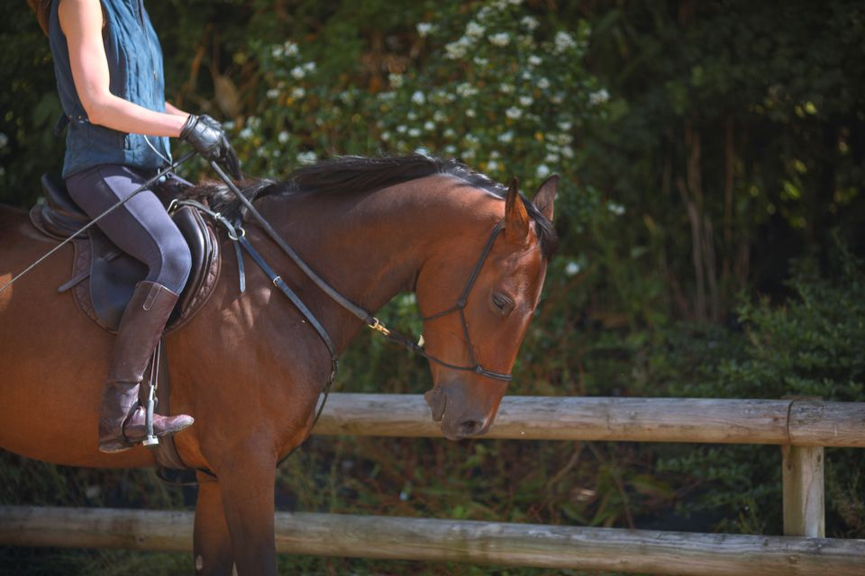 Horse with bitless bridle