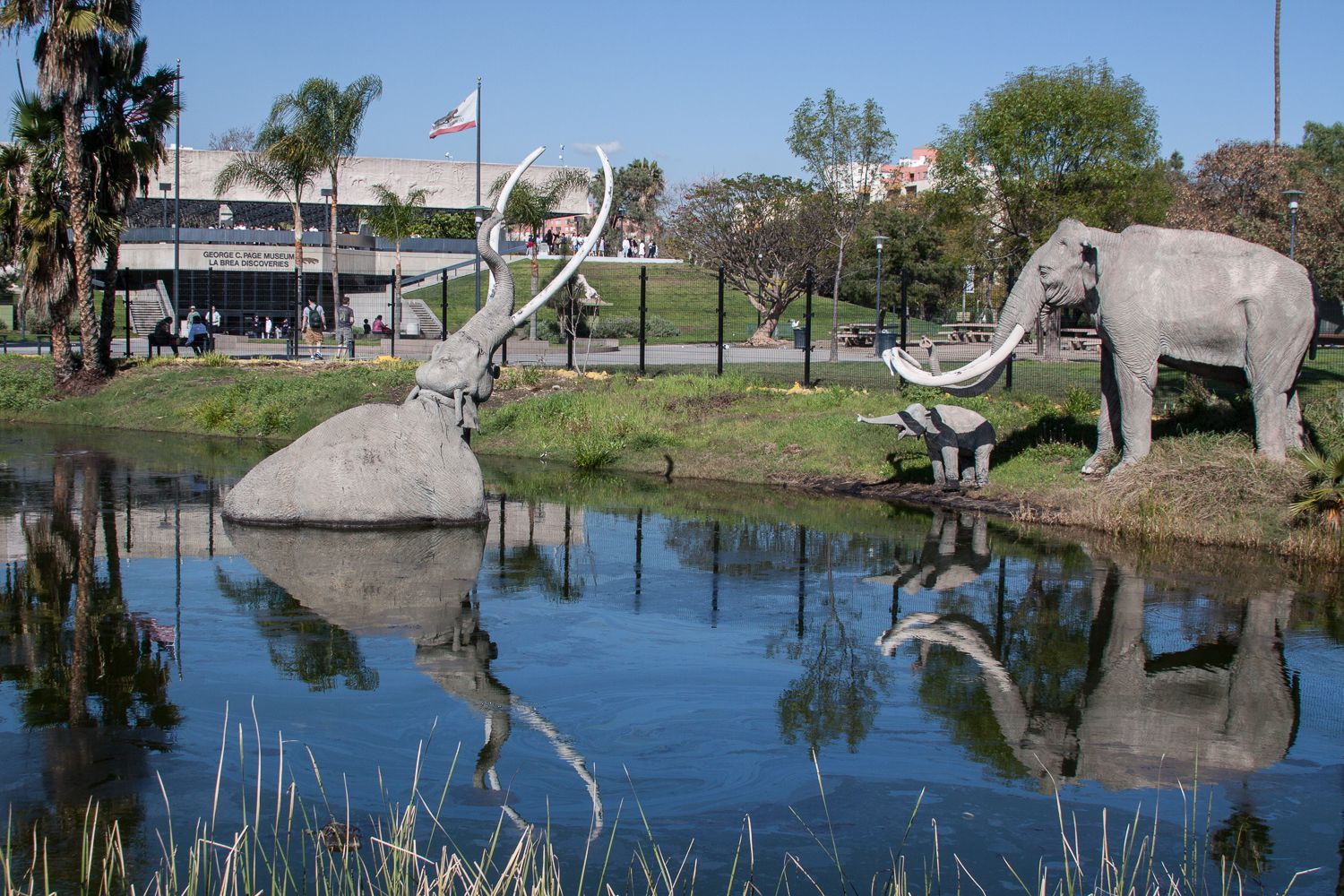 la brea tar pits View beautiful pictures of la brea tar pits, los angeles sorted by theme and destinations, browse our large gallery of la brea tar pits, los angeles photos & images.