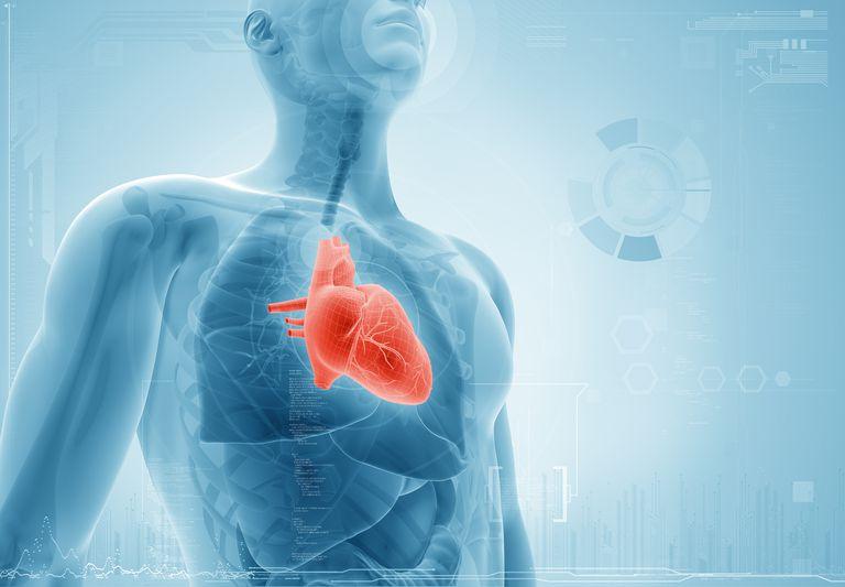 Heart x-ray concept