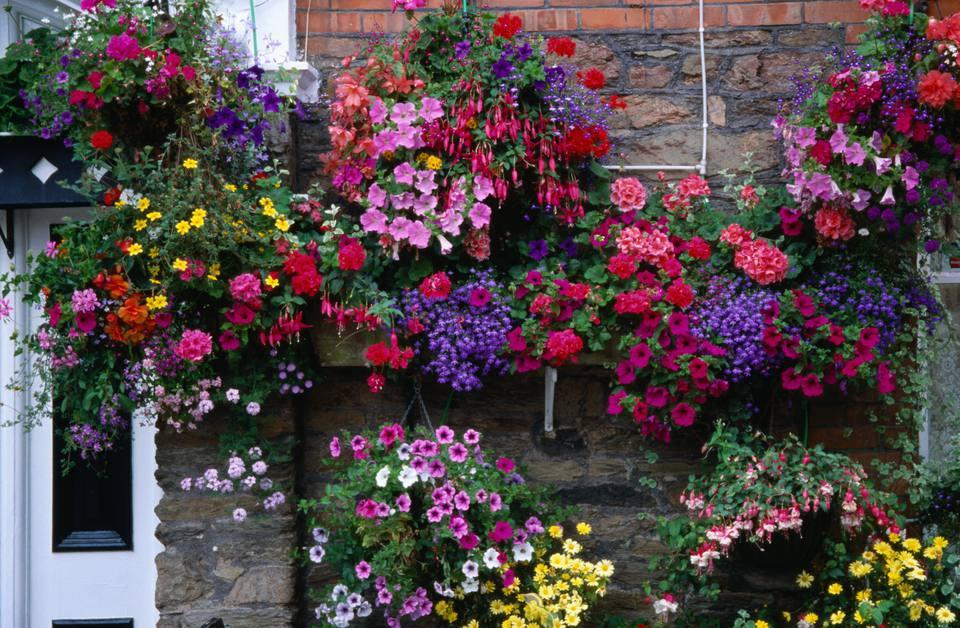 Flowering hanging basket ideas workwithnaturefo