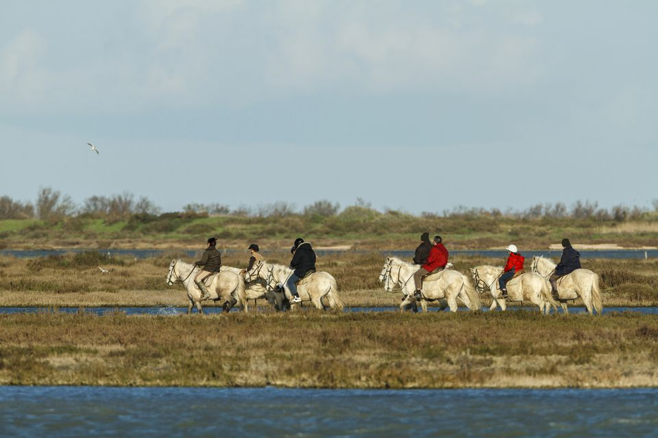 Tourists riding horses through the marshes of the Camargue in France.