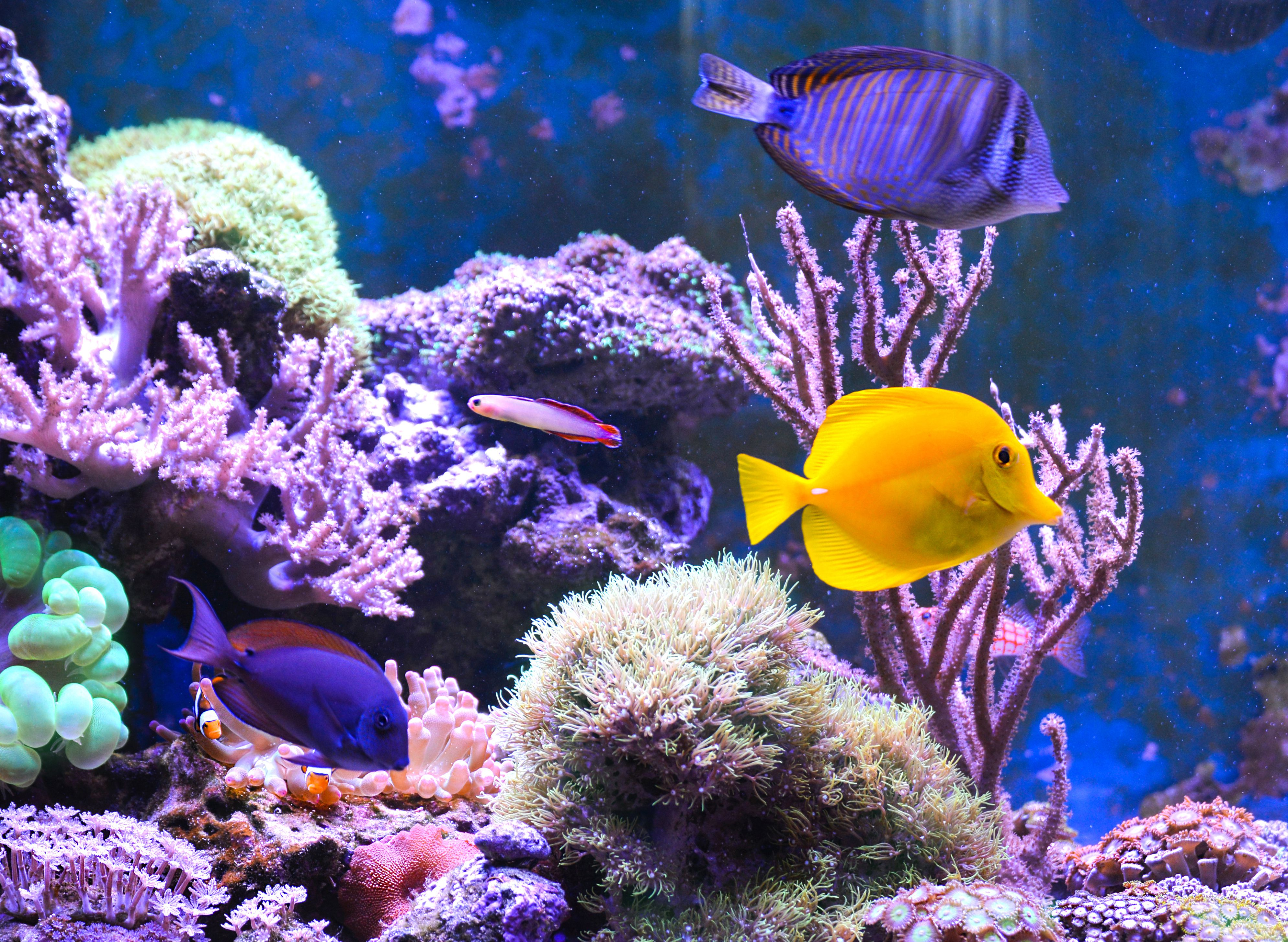 Causes of New Tank Syndrone in Saltwater Aquariums