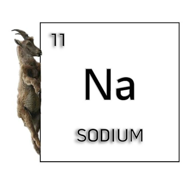 a goat climbing up the side of sodium on the periodic table of elements - Periodic Table Jokes Tumblr
