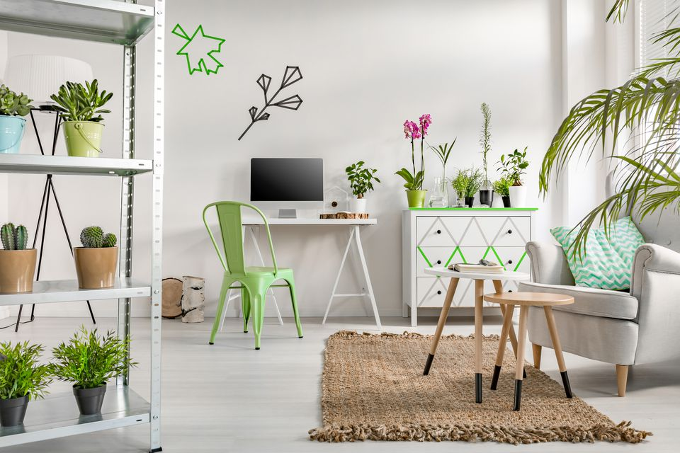 Houseplants for a Modern Home Design