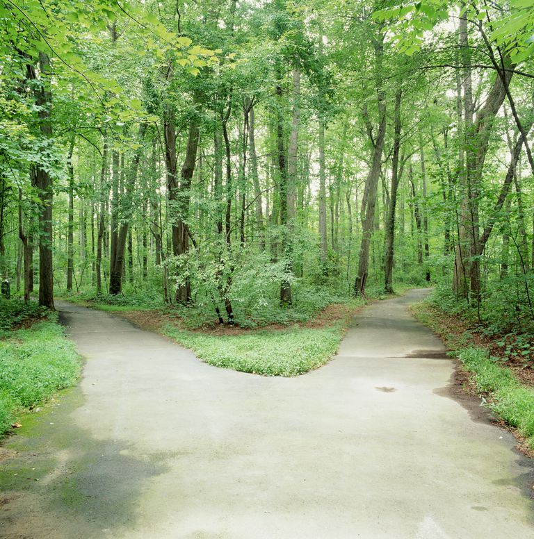 Fork in road surrounded by trees, Reston, Virginia, USA