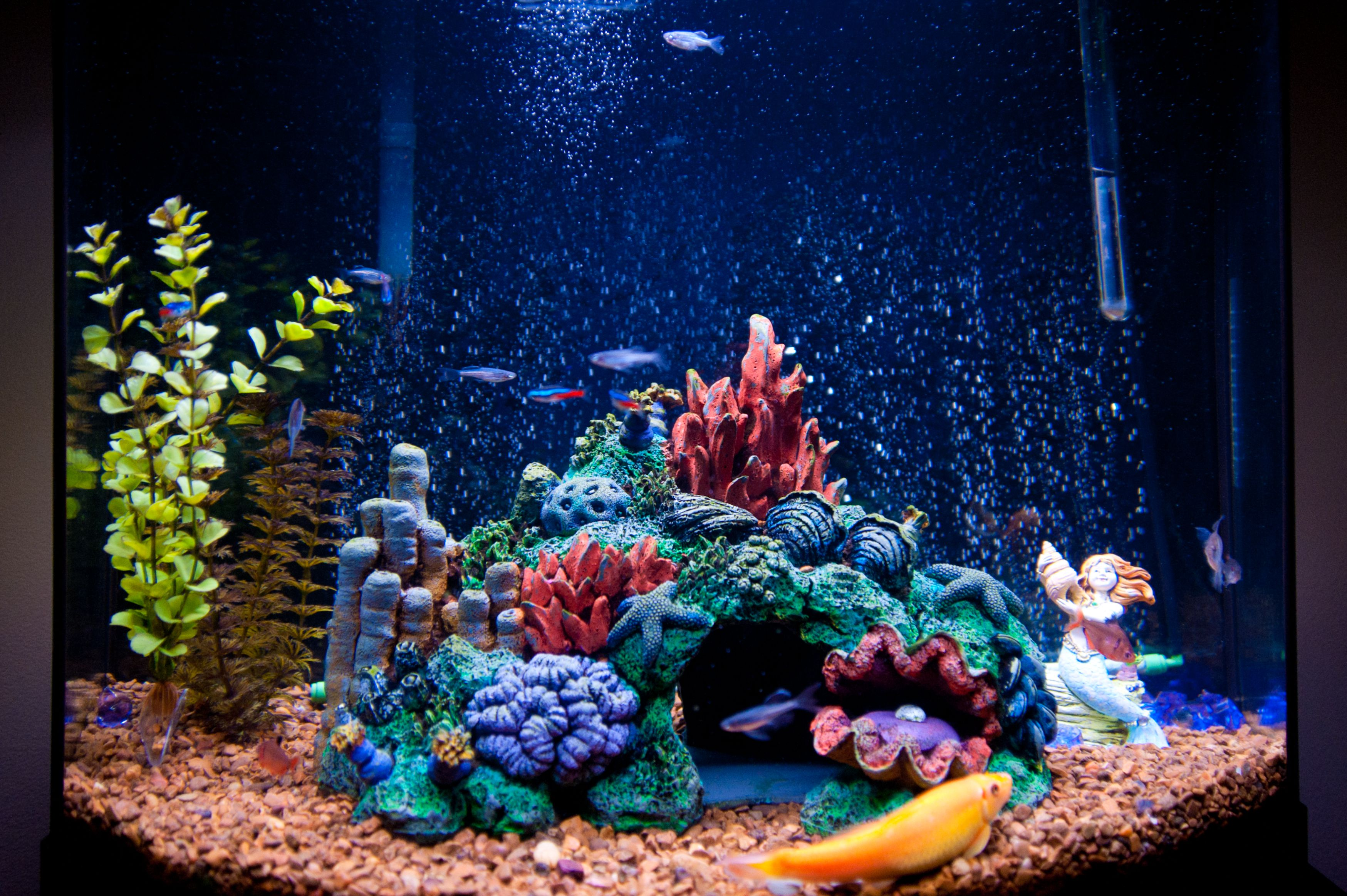 Lighting for a saltwater aquarium for Fish tank top cover