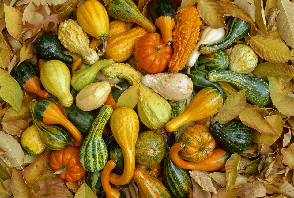 Festive fall gourds