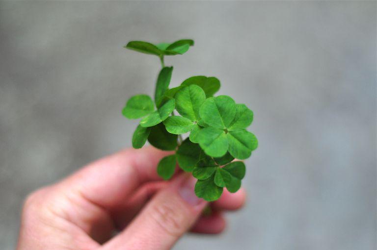 luck-clover-Brooke-Schmidt.jpg