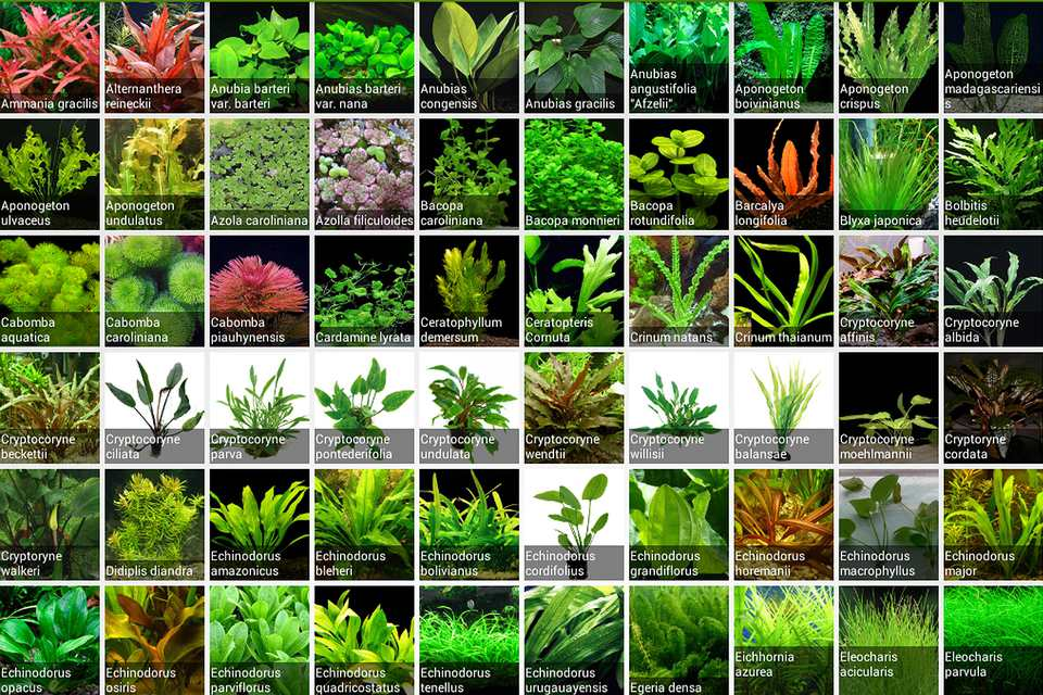 Plant types for aquariums