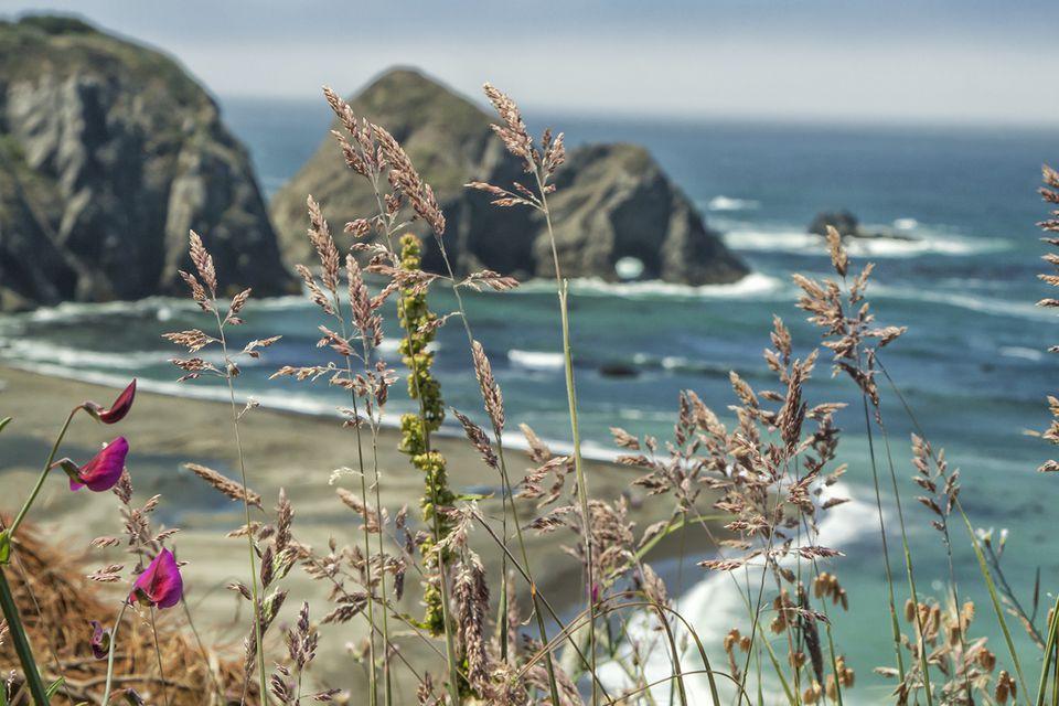 Goat Rock Beach View