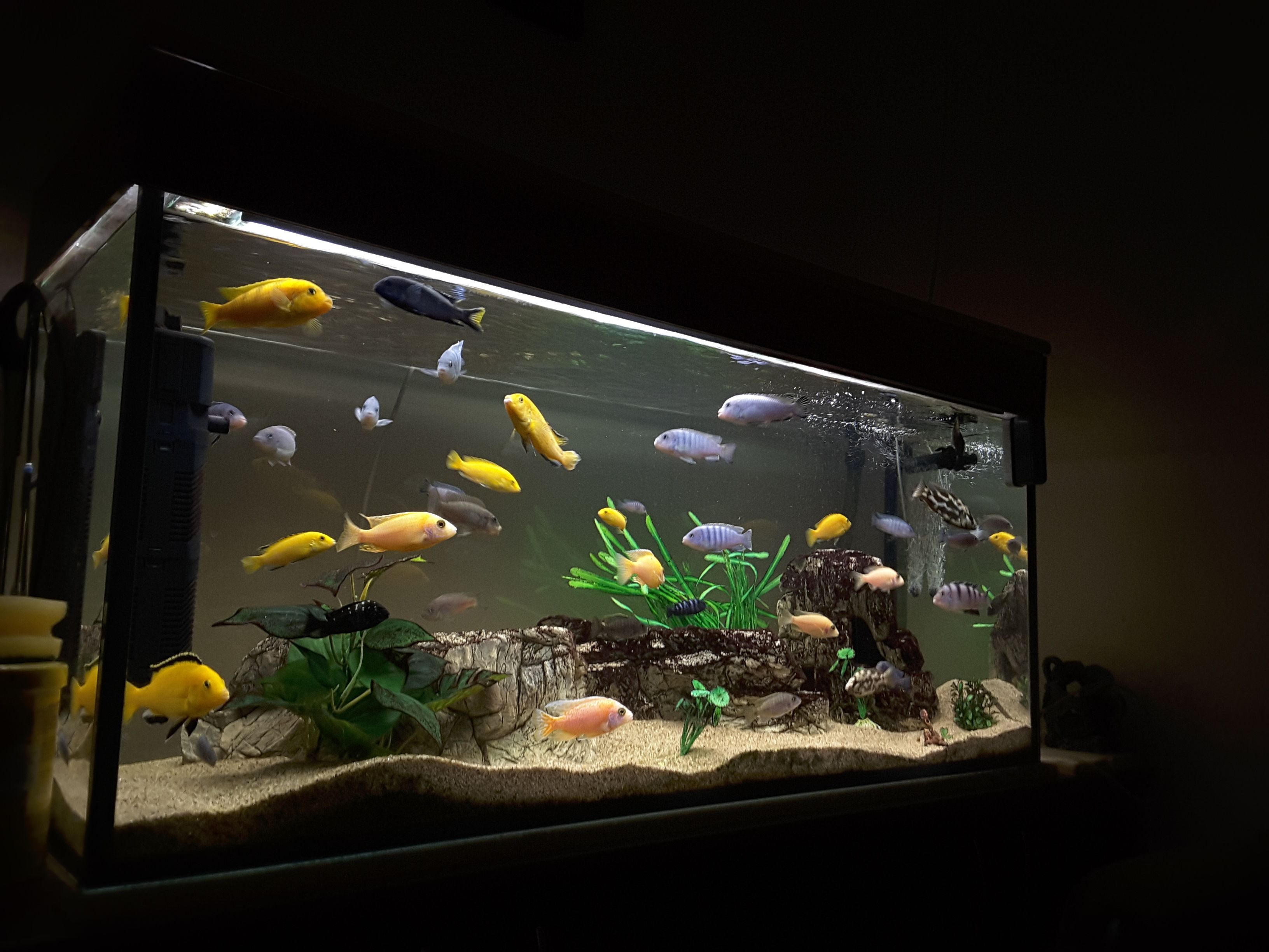 Tips for aquarium filter media order for How to keep fish tank clean without changing water