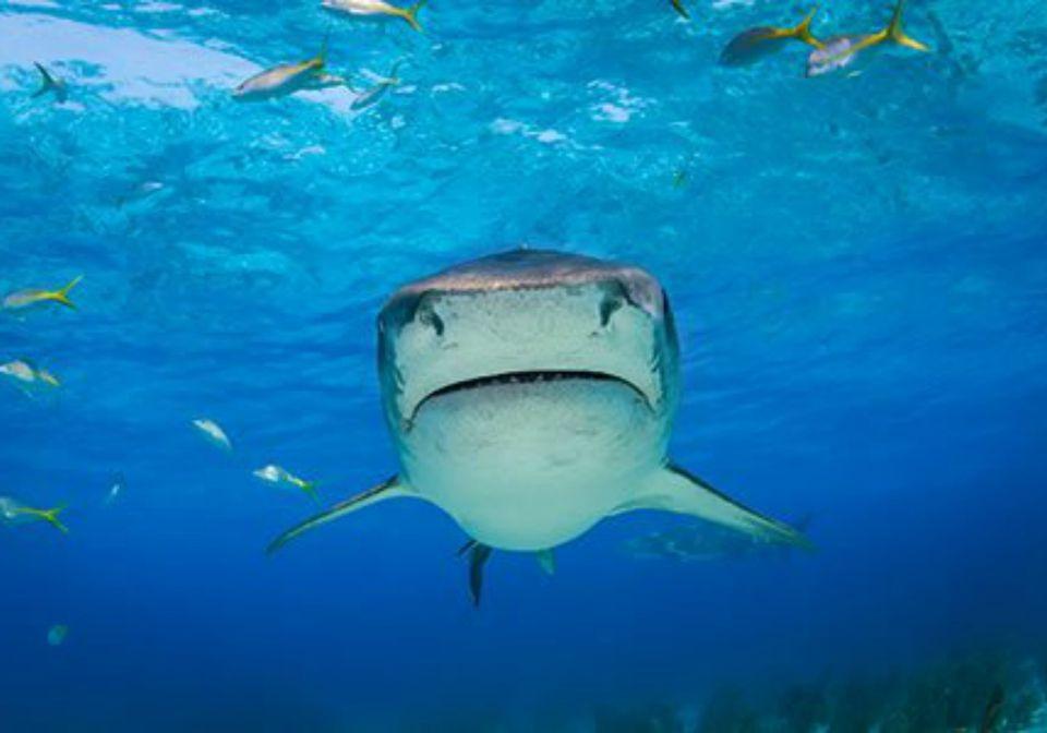 Follow Sharks on Twitter