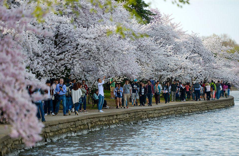dating site advisor cherry blossom service
