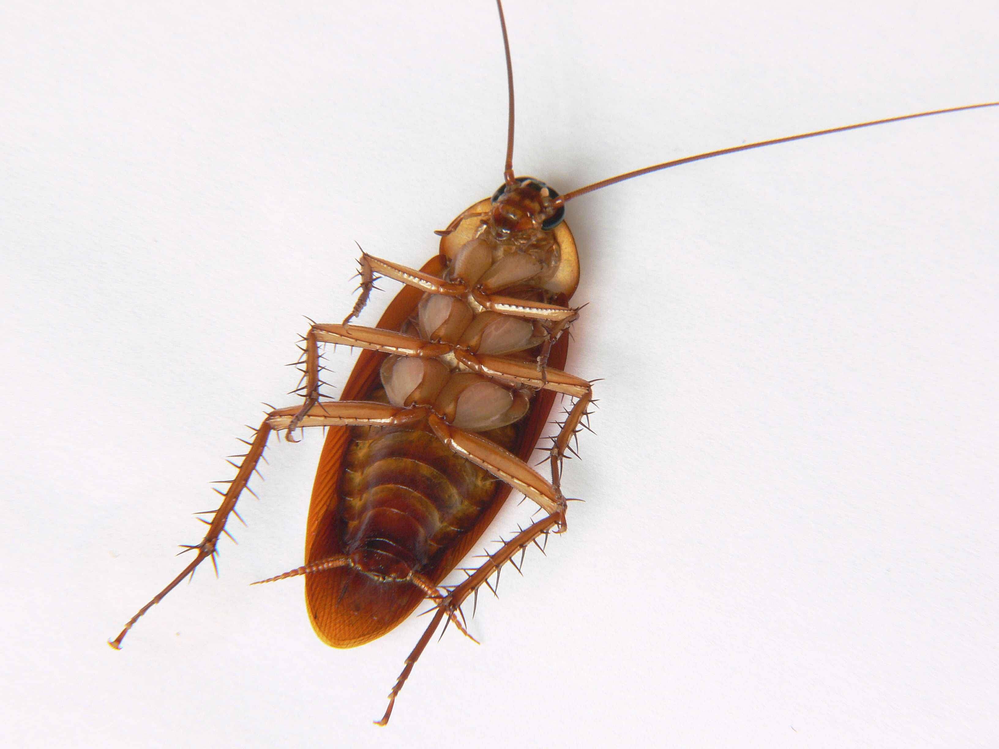 How to Get Rid of Roaches in Your Garage