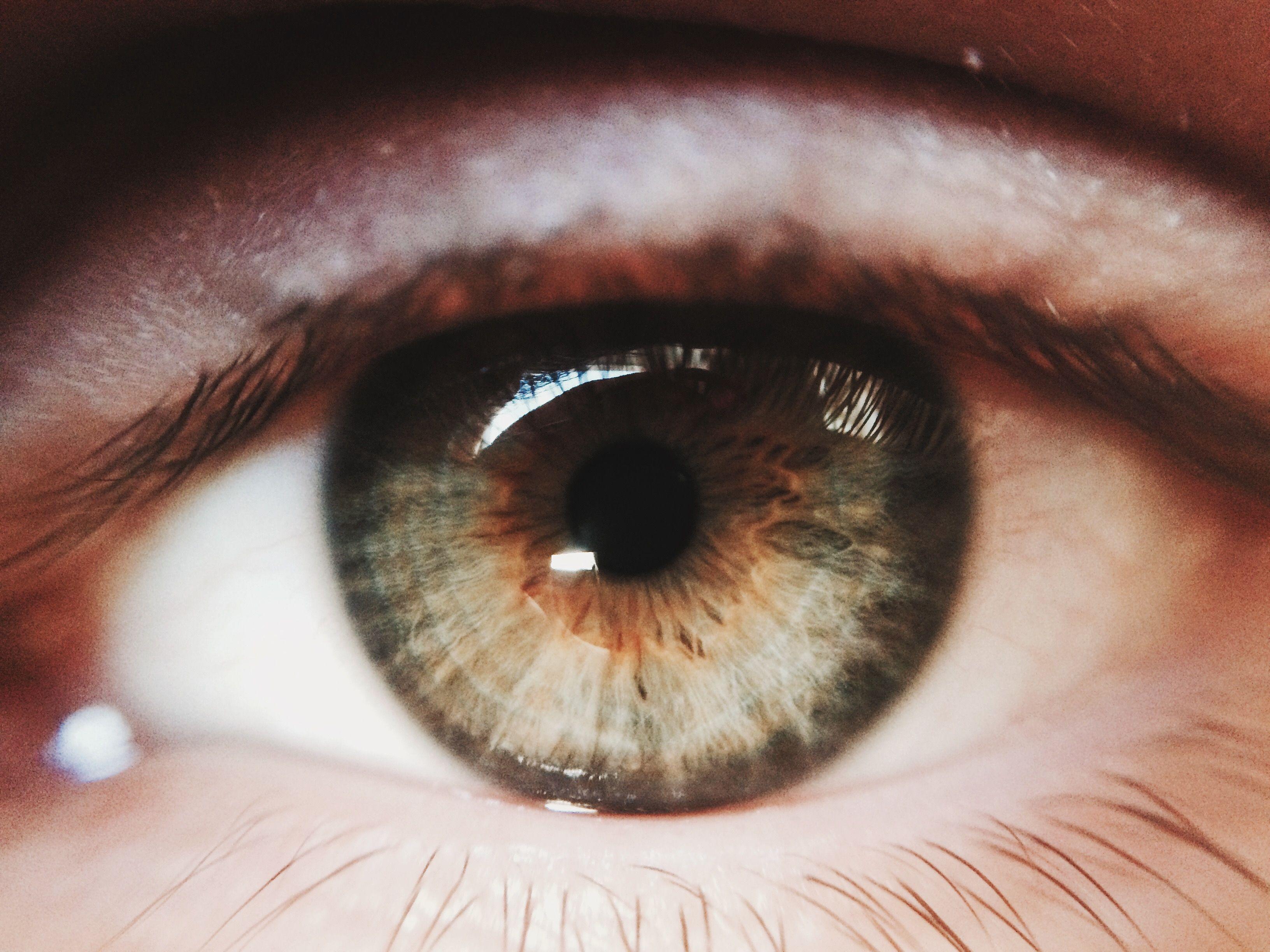 Polygenic inheritance how did eye color evolve nvjuhfo Gallery