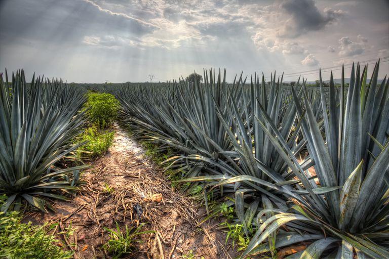 10 paisajes inolvidables de México
