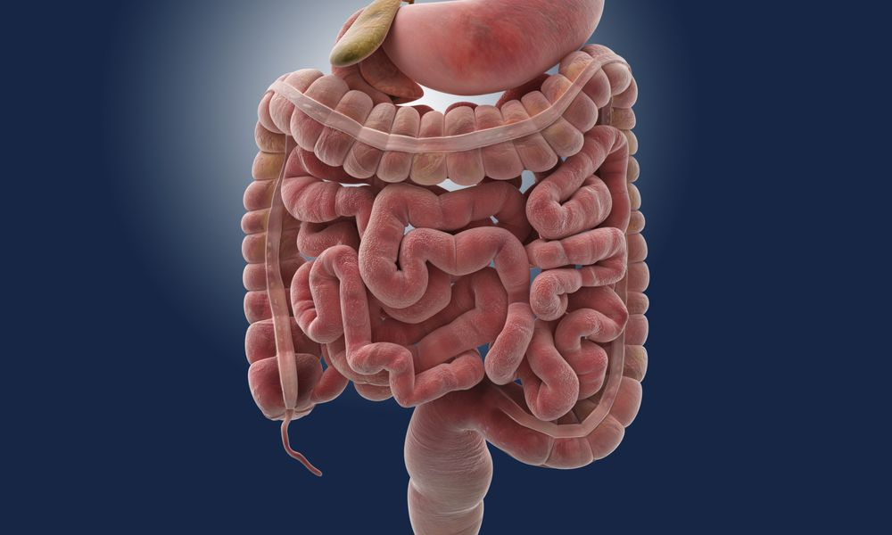Leaky gut - intestines