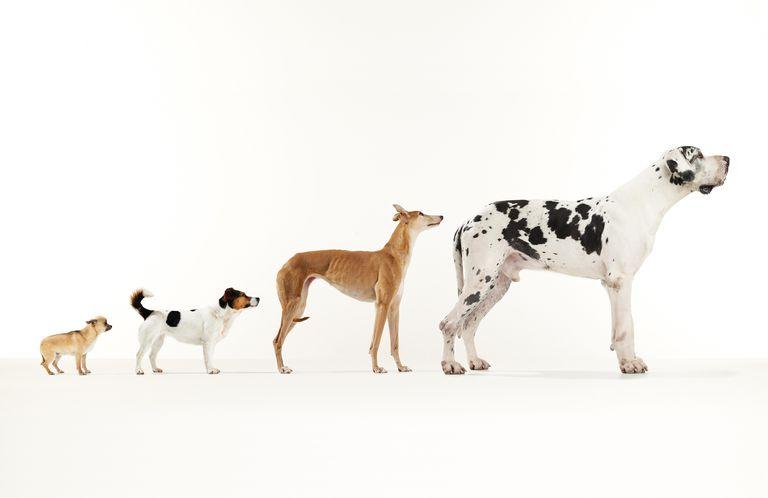 Variation on a Dog