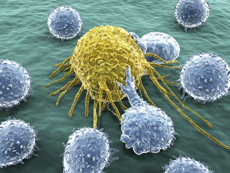 Artistic rendering of a cancer cell surrounded by smaller T-cells, or T-lymphocytes.