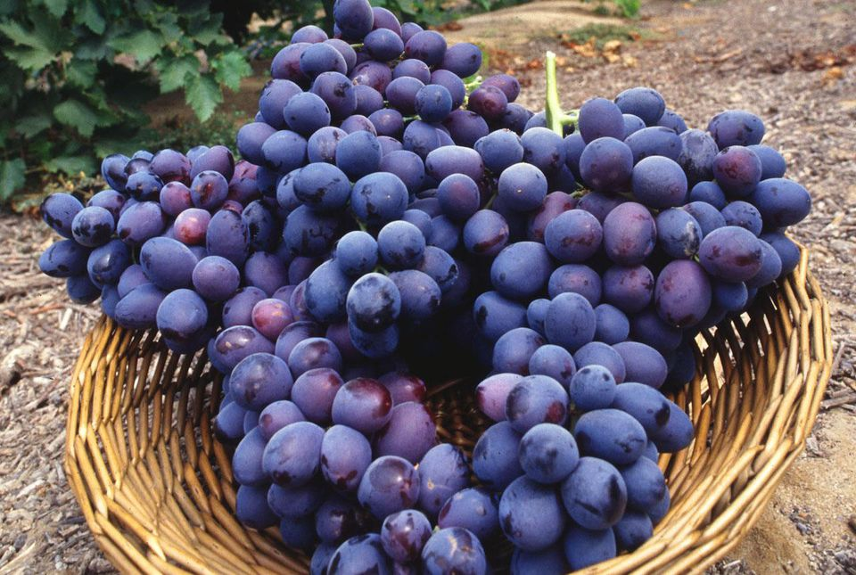 Autumn royal grapes