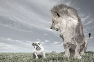 Contingent Deferred Annuities represent a small niche in the annuity industry compared to the lion's share of products; their popularity will grow.