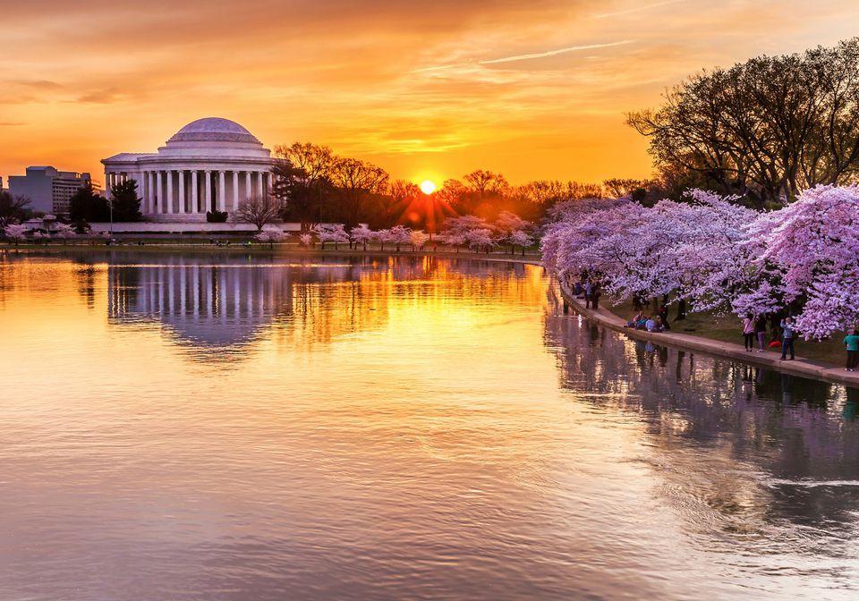 Springtime in Washington DC Cherry Blossom Festival