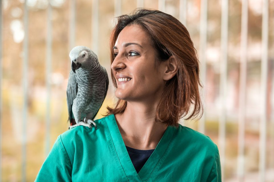 Young happy veterinarian with a parrot on her shoulder.