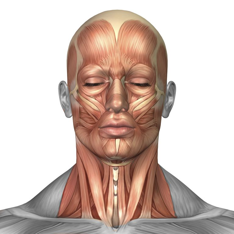 Neck muscles, including sternocleidomastoid.