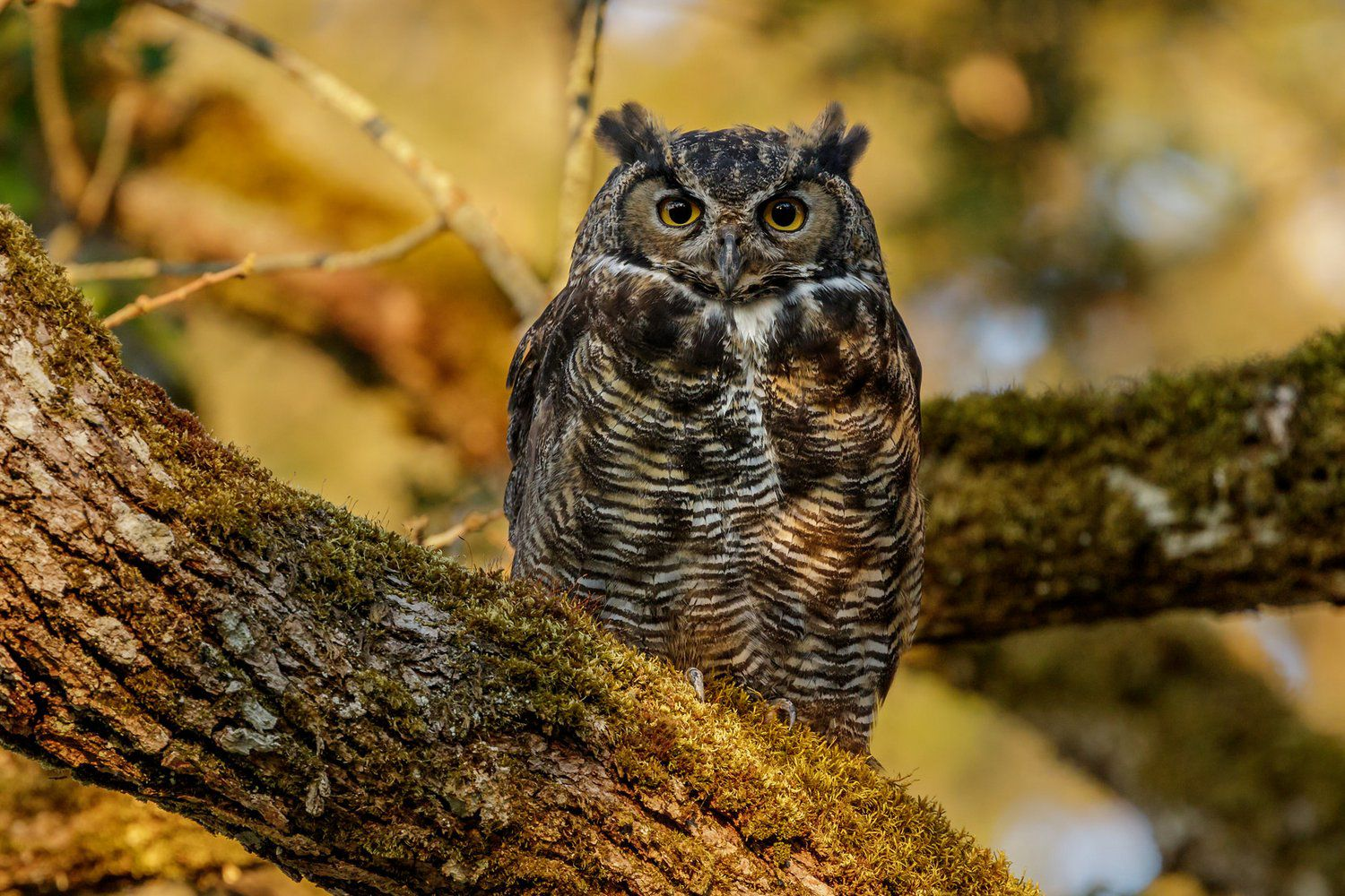 What Is An Owl Special Characteristics