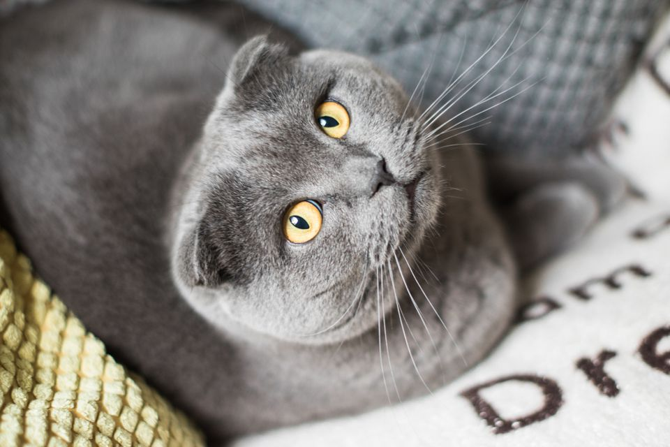 High Angle Portrait Of A Cat