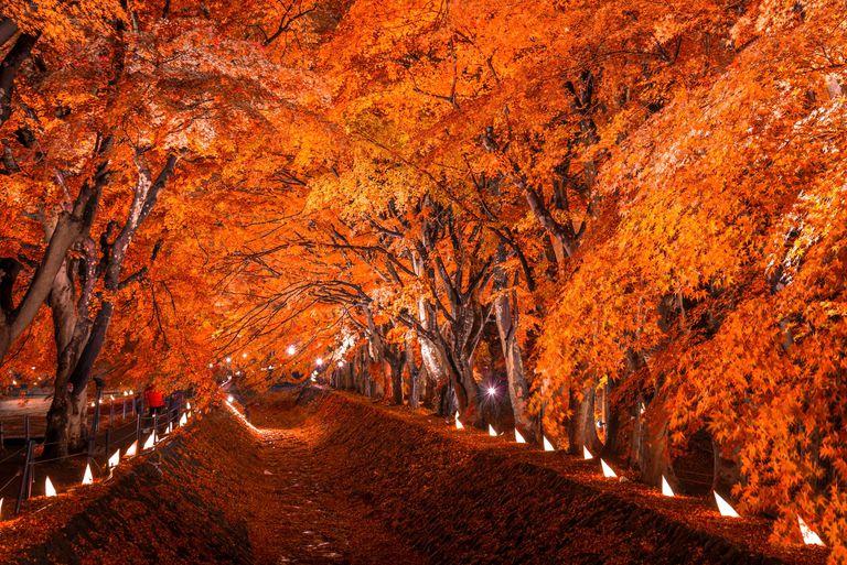 Arces del Japón