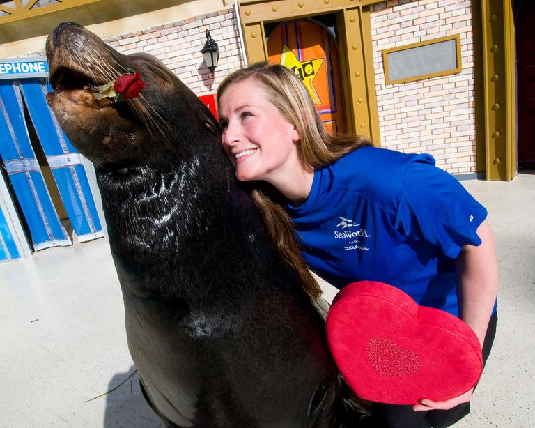 AN DIEGO, CA - FEBRUARY 14: In this handout image provided by SeaWorld, SeaWorld San Diego trainer Summer Matthews celebrates Valentine's Day with Clyde, a California sea lion who performs with