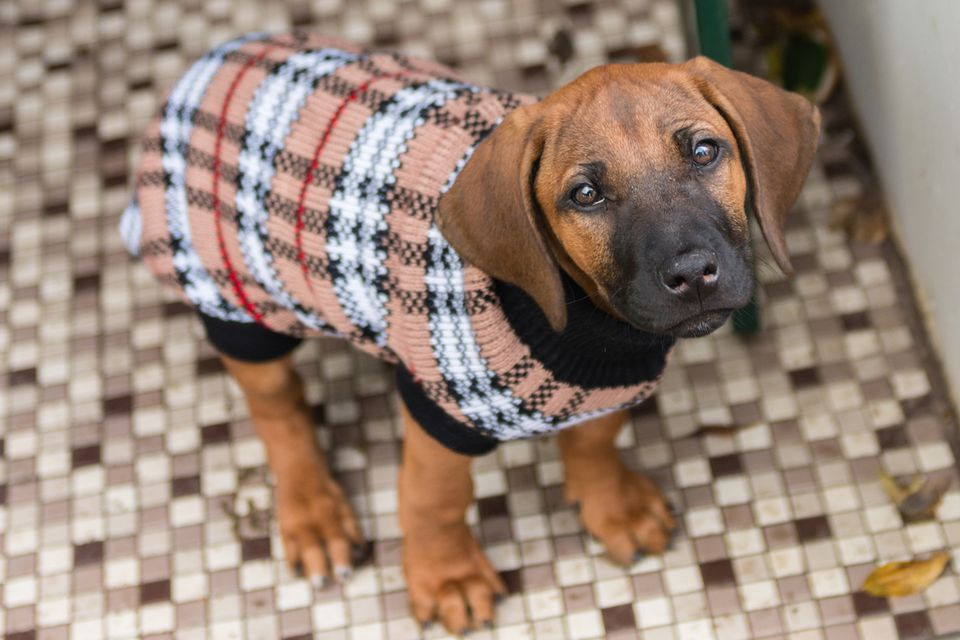keep dogs safe and warm in winter