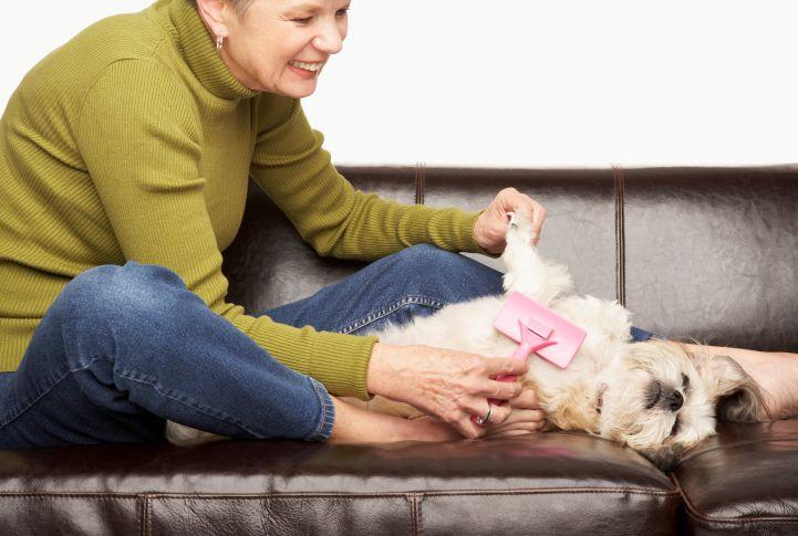 Photo of Woman Brushing Dog