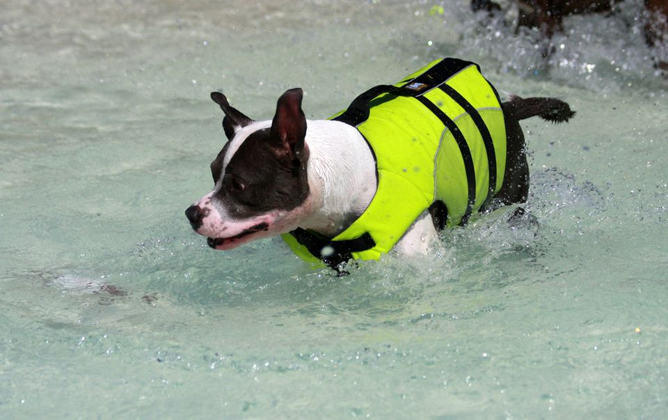 dog-life-jacket-gloria-flickr.jpg