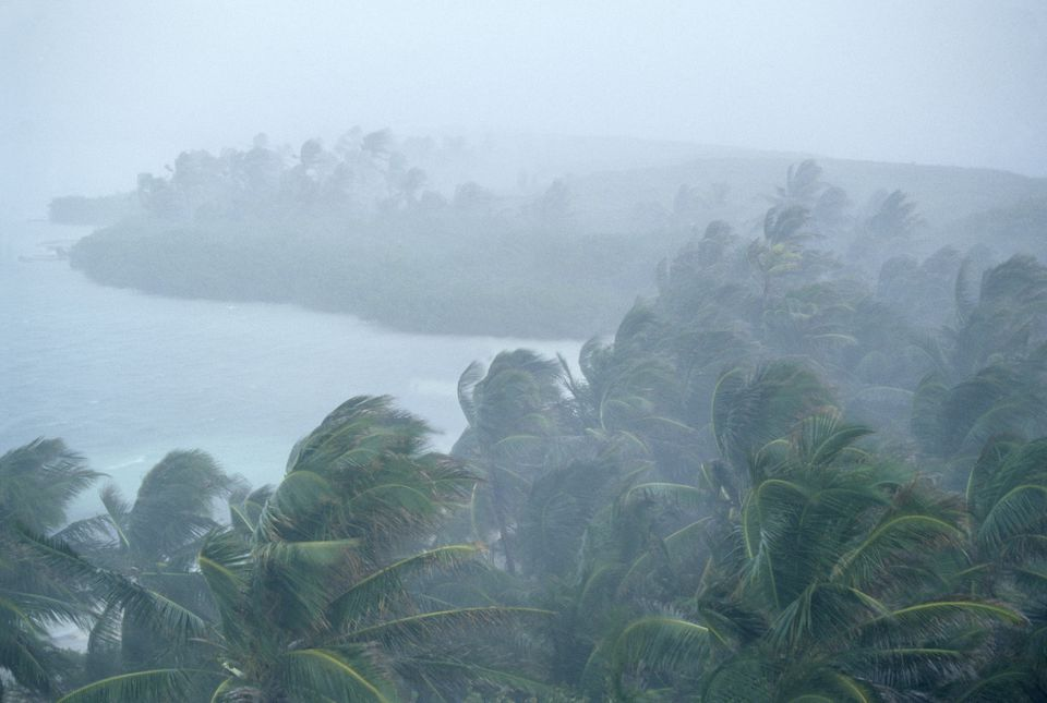 Coconut palm trees (Cocos nucifera) during storm, Contoy Island National Park, near Cancun, Caribbean Sea, Mexico, January