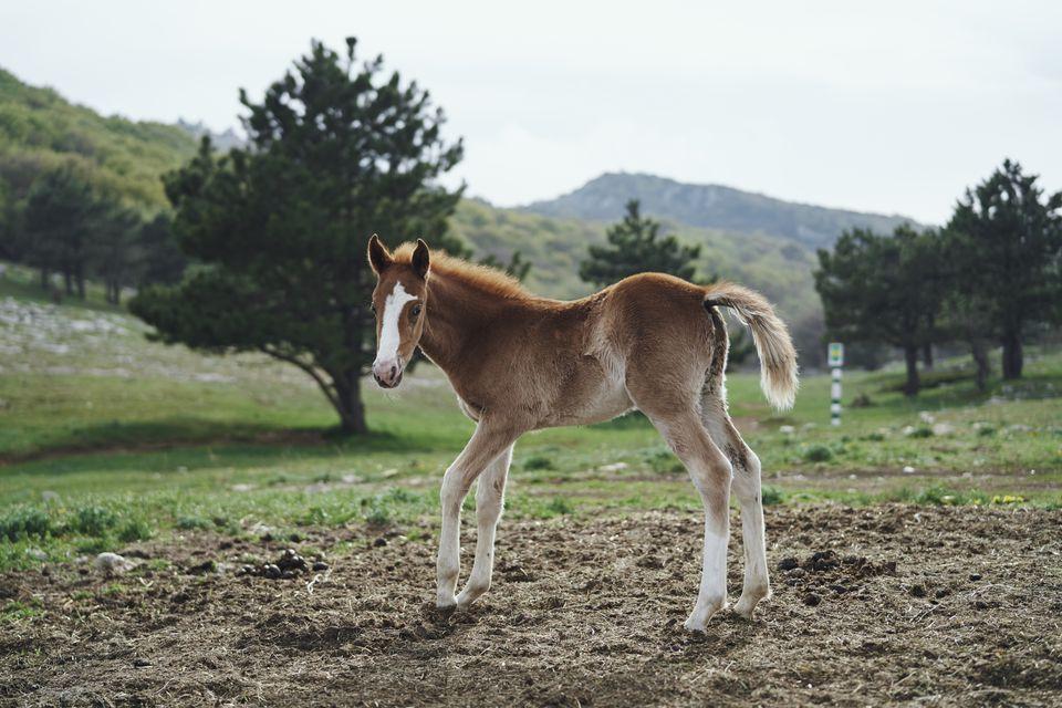 Horse foal standing in field